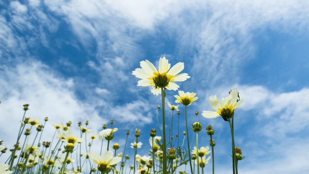 ◆◆全般性不安障害に対する薬物治療:系統的レビューとネットワークメタアナリシス◆◆