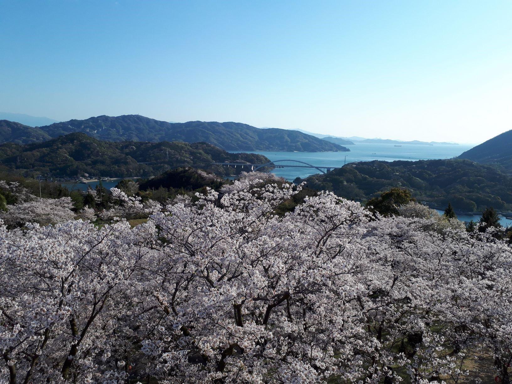 桜collection 2020 in今治