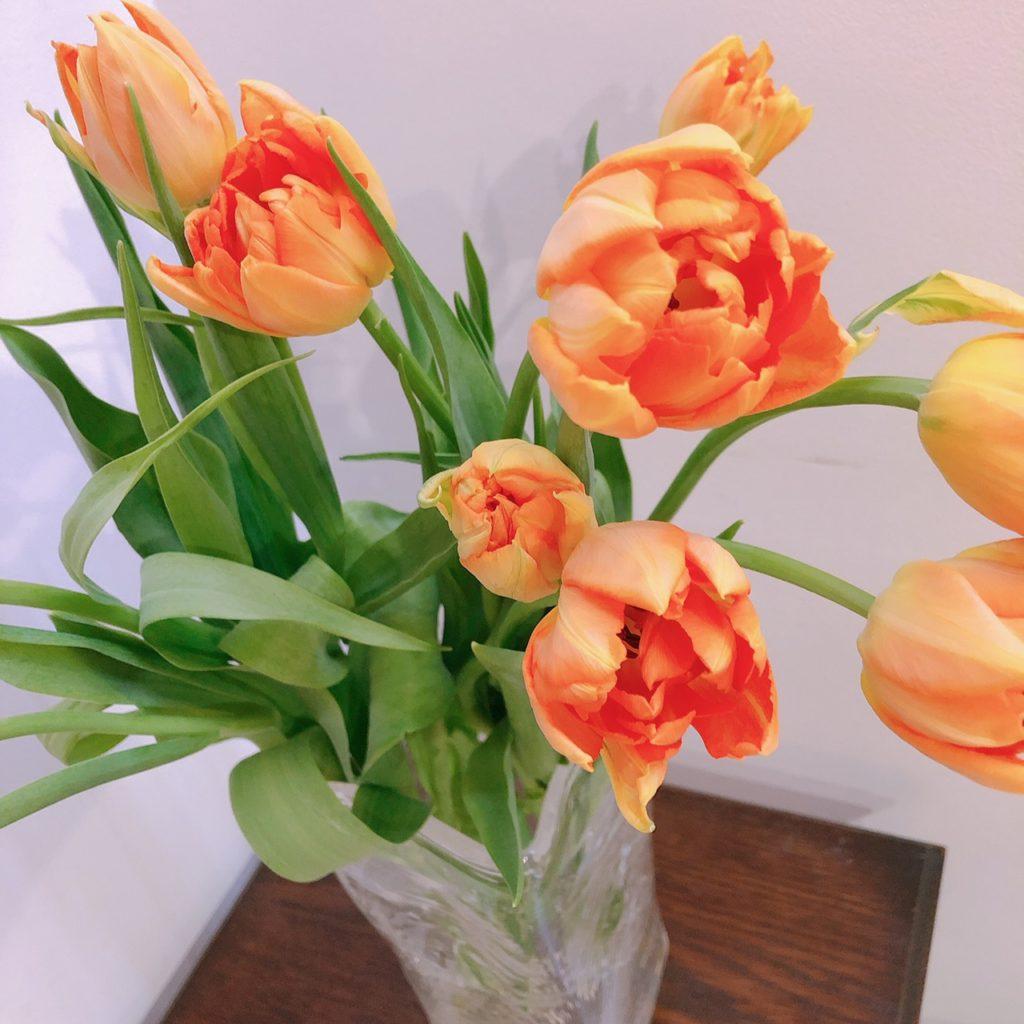 今週のお花:チューリップ