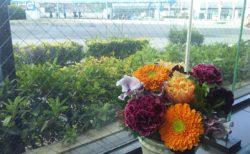 今週のお花(平野屋)