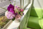 拝志の今週のお花